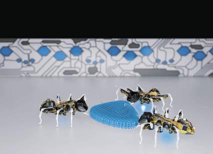 BioniCANTs: роботы-муравьи договорились о совместном перемещении объекта