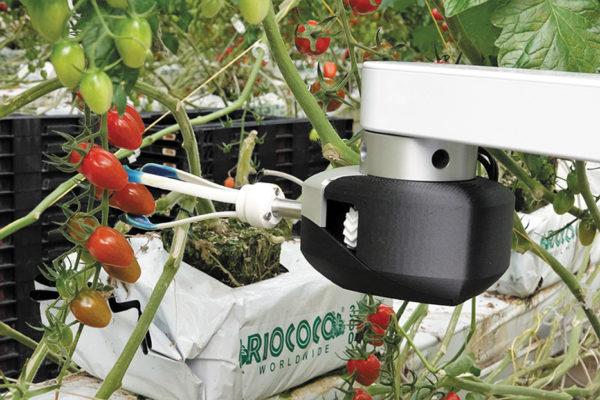 Усовершенствованное компьютерное зрение, искусственный интеллект и настраиваемые инструменты на конце руки-манипулятора позволяют коллаборативному роботу Virgo собирать спелые томаты прямо с куста
