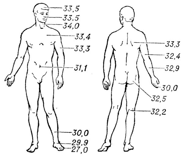 Распределение температуры по поверхности кожи здорового человека