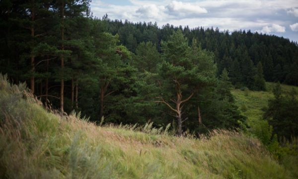Искусственный интеллект будет контролировать леса в Пермском крае