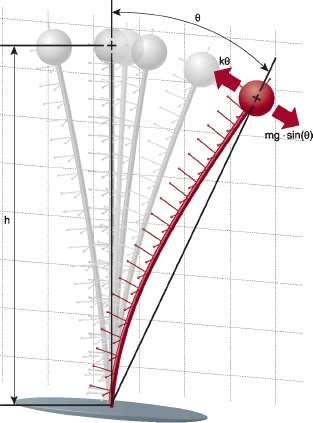 Эта подпружиненная нагрузка имеет общую массу m, расстояние от центра масс до точки поворота h. Пружина отклоняется по дуге от вертикального положения после горизонтального воздействия. Сила тяжести нагрузки - mg.sin противопоставляется упругому усилию стержня k. Константы g и k представляют ускорение свободного падения и модуль упругости стержня. Источник: Control Engineering с данными от The Math Works