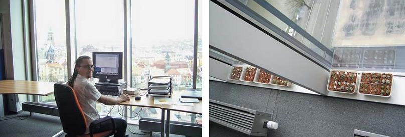 Офис компании Kerio (Чехия): комфортно даже кактусам